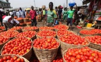 Nigeria Tomoto