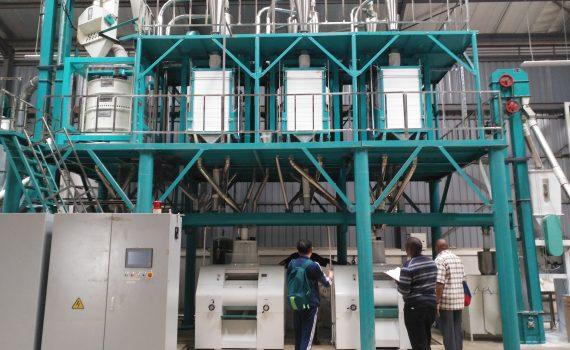 50T maize flour mill in Thika Kenya